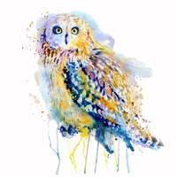 Short Eared Owl Watercolor Painting