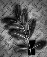 Leaves and metal plate, Edit B