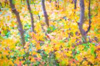 Colorful Forest Abstract