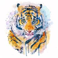 Tiger Face Watercolor portrait