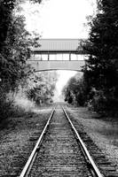 Sunlit Train Path B+W