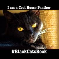 Black Cats Rock 2