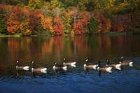 Autumns Flock Of Eight