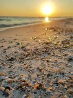 sea shells sunset