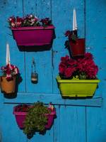 Potted Flowers on a Blue Shutter