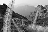 Rugged Vista Monochrome