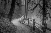 Winding Path, Misty Forest