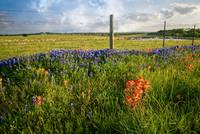 Sun-Drenched Wildflowers in Brenham