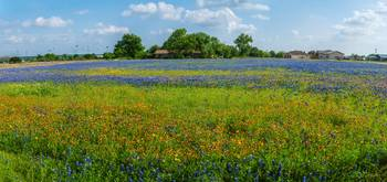 Layer Upon Layer of Wildflowers Panorama