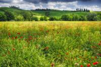 Tuscan Spring Meadow I