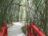 red bridge on a winding path through a bamboo gard