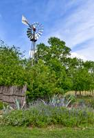 Windmill, Wildflowers in Texas Hill Country