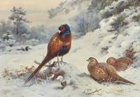 Thorburn, Archibald GAME BIRDS AND WILD-FOWL OF GR