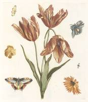 Tulips, other flowers, butterflies and a fly, anon