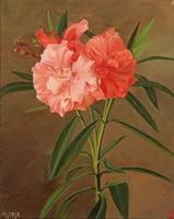 Josef Schuster attributed (1812-1890) Oleander flo