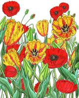 Yellow Parrot Tulips Red Poppies Watercolor