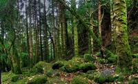 Torc forest