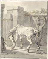 Bareback horse by the bridle attached to a pole, J