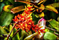 Among the Bromeliads