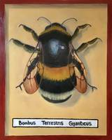 Giant Bumble Bee Specimen