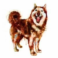 Husky Dog Watercolor Painting