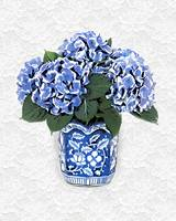 Blue Hydrangeas in Victorian Vase White Lace Backg
