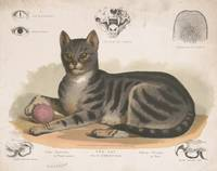 Vintage Illustration of a Domestic Cat (1872)