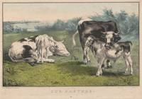 Vintage Cattle Farm Illustration (1856)