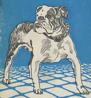 Vintage American Bulldog Illustration (1912)