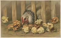 Vintage Chicken & Baby Chicks Painting (1891)