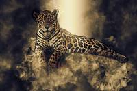 Mystical Jaguar on a Rock
