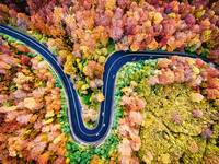 Winding Road Through the Autumn Woods 1