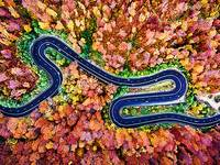 Winding Road Through the Autumn Woods 2
