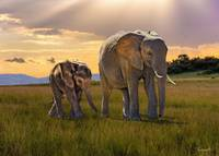 Bush Elephant Cow And Calf
