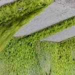 """""""Algae dam"""" by srikanthsastry"""