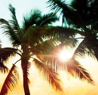Hazy Sunset Palms Photo
