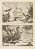 Four exotic birds, Jan Goeree, 1650 - 1731