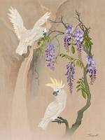 Cockatoos And Wisteria