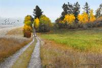 idaho backroad autumn