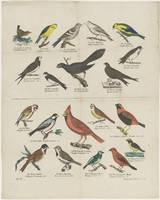 Vogels, G.N. Renner & Co., 1837 - 1868