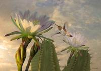Allen's Hummingbird and Cactus Flowers