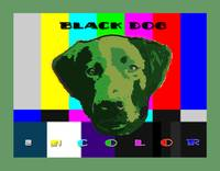 Black Dog in Color