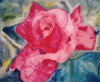 PINK ROSE GLORY - 12 X 14 - WATERCOLOR