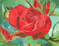 ROSE BLOOM AND BUD - 9 X 12 - WATERCOLOR - 1998