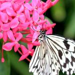 """Pink Flower with White Butterfly"" by illinichick357"
