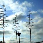 """Whimsy Trees - San Pedro, CA."" by Nesa"