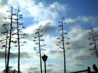 Whimsy Trees - San Pedro, CA.