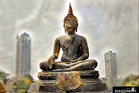 Buddha in the City