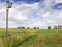 Birdhouse and Pasture