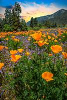 Sunset Skies and Wildflowers at the Oak Glen Prese